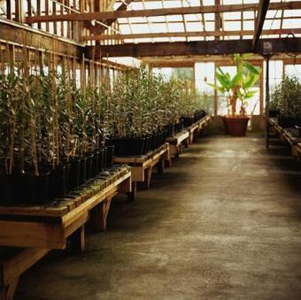 The Best Plants for Hydroponic Greenhouses | Vertical Farm - Food Factory | Scoop.it