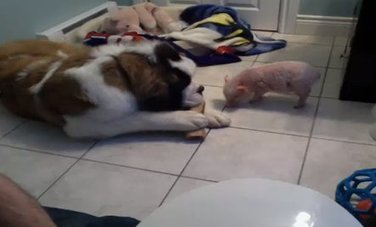 Elliot the Pig and His Giant Friend   Reading, Writing, and Thinking   Scoop.it