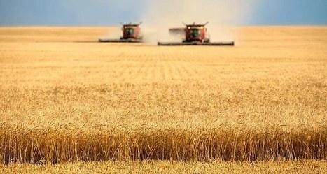 Agriculture: la France a dix ans pour renouer avec la compétitivité - Les Echos | Le Fil @gricole | Scoop.it
