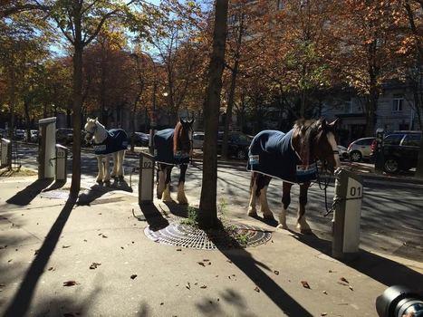 VIDÉO. Des chevaux aux bornes Autolib dans le 16e arrondissement de Paris | Paris 16e | Scoop.it