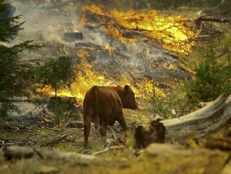 What Do Wild Animals Do in a Wildfire? | Nature enviroment and life. | Scoop.it