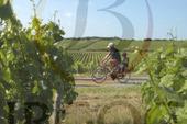 Oenotourisme en Bourgogne : un beau programme pour cet été !   Revue de Web par ClC   Scoop.it