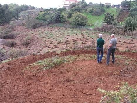 Infonortedigital.com - Día del Árbol, más de 2.000 plantas y sillas todoterreno el domingo en Doramas | LA JOËLETTE EN ESPAÑA - Revista de prensa | Scoop.it