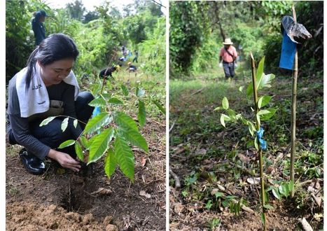 Senheng helps to grow a forest | Silviculture and Forest News | Scoop.it