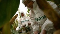 """109 nobeles acusan a Greenpeace de """"crimen contra la humanidad"""" por los transgénicos   News Medio Ambiente   Scoop.it"""