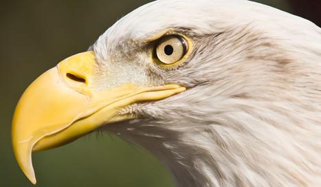 Can Scientists Turn Birds Back Into Dinosaur Ancestors? – Phenomena: The Loom | Mr. Isaacs Biology | Scoop.it