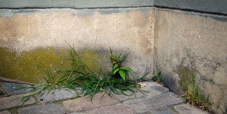 Les plantes sauvages des villes livrent leurs premiers secrets   Territoires apprenants, sciences participatives, partages de savoirs   Scoop.it