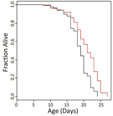 Could ibuprofen be an anti-aging medicine? | KurzweilAI | Longevity science | Scoop.it