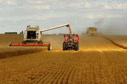 FAO food price index declines further in February   Food Security   Scoop.it