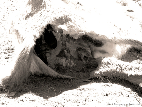 PhotoGrab | Art & Photography | Scoop.it