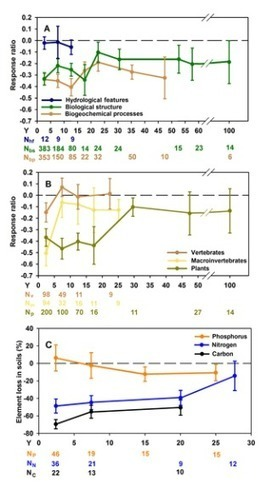 Moreno-Mateos et al 2012: Structural and Functional Loss in Restored Wetland Ecosystems | Nature + Economics | Scoop.it