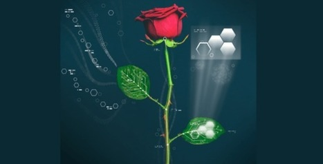 New Discovery: Cyborg roses could open the floodgate of opportunities in the future - News Independent | SynBioFromLeukipposInstitute | Scoop.it