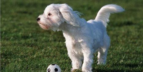 Ain : son chien lui sauve la vie dans un incendie   CaniCatNews-actualité   Scoop.it