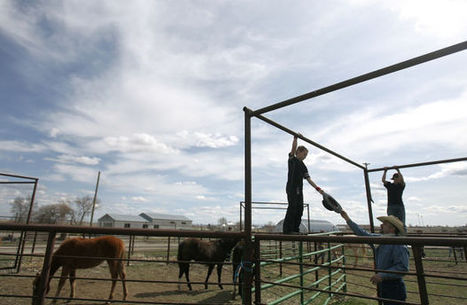 Horses Help Heal Youth in Gooding Therapy Program | Horse Sense | Scoop.it