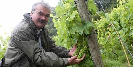 Quatre ares de vignes en pleine ville, Bruxelles produit aussi du vin !   Le vin quotidien   Scoop.it
