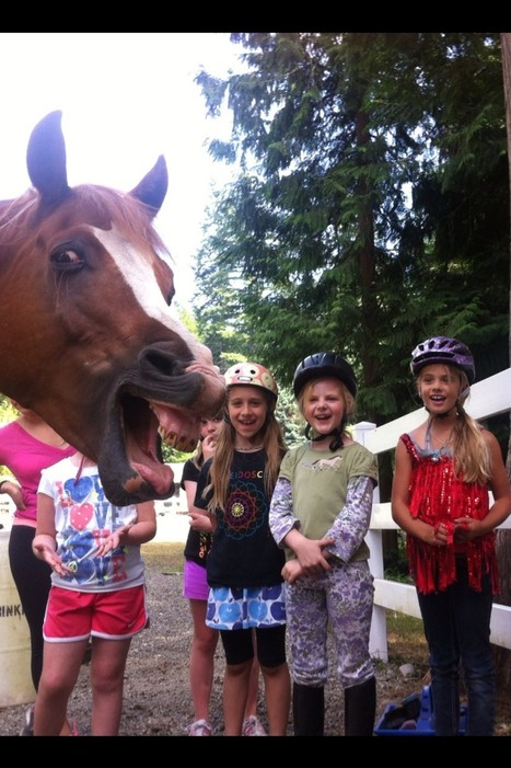 Cute Horse Photobomb.  How a horse can get us all to smile! | Horse And Rider World | Scoop.it