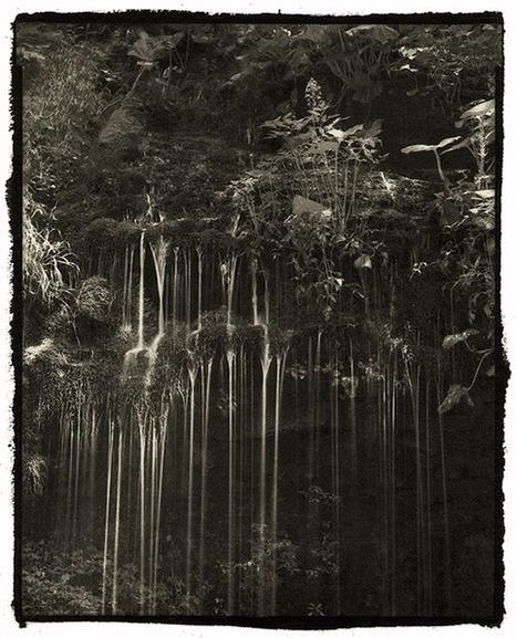 This Photographer Makes Platinum Palladium Prints of Nature That Last 1,000 Years | Digital Photo | Scoop.it
