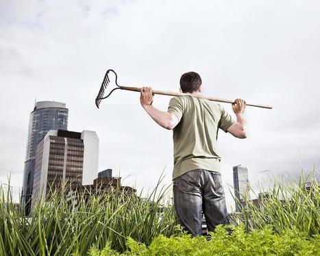 Le boom de l'agriculture urbaine | potager urbain | Scoop.it