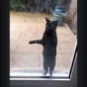 Ce chat veut vraiment rentrer dans la maison - Spi0n.com | Funny and crazy cats | Scoop.it