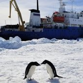 How Icebreakers Work and Why They Get Stuck - Discovery News | Antarctica | Scoop.it