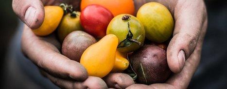 Tomates hors-la-loi, légumes en résistance: qui décide de ce que nous mangeons? | Questions de développement ... | Scoop.it