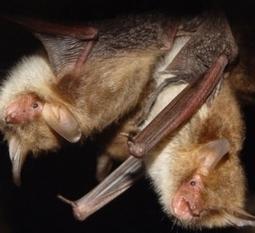BIOLOGIE: En pleine nature, le sexe tue | Nature insolite | Scoop.it