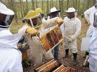 Installation en apiculture | Blog du Pays Bourgogne Nivernaise | Abeilles, intoxications et informations | Scoop.it