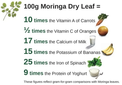Nutritional values of moringa leaf powder... | Miracle Moringa | Scoop.it