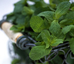 Aromatherapy: using your garden | Gardening is more than Digging the Dirt | Scoop.it