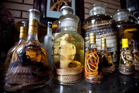 Snake Wine and Other Wild Souvenirs to Avoid | Biodiversity protection | Scoop.it