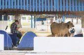 Montadora da estutrura da Expoagro deve ser escolhida hoje | Guia Franca | Scoop.it