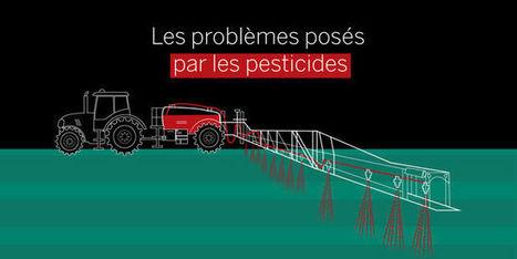Comprendre les problèmes posés par les pesticides en 5 minutes | 694028 | Scoop.it