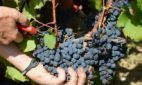 Global wine shortage feared as slump in production hits record levels | Culinary Travel & Documentaries | Scoop.it