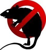 2 Girls Left Dead After Poisoning Plot In Kindergarten Rivalry - Medical Daily | Rat Removal Atlanta | Scoop.it