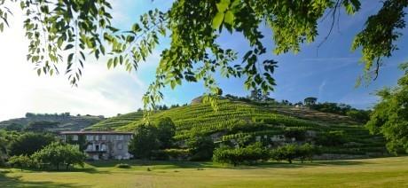 有机葡萄酒:食品安全风暴下的定心丸 | 葡萄酒,香槟,维塔贝拉新闻 | Scoop.it