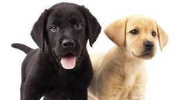 All bark and no bite: Why Quebec's new animal breeding laws are useless | ETHIQUE ANIMALE | Scoop.it