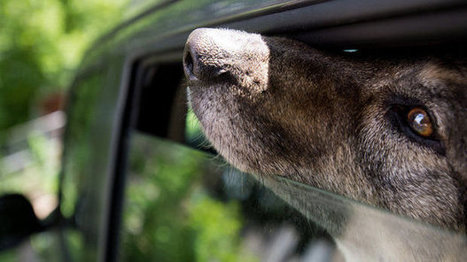 All Canadian Provinces: Change the to allow the right to break a window to save a pets and kids left in a hot car. | ~ADVOCATING FOR ALL ANIMALS~ | Scoop.it