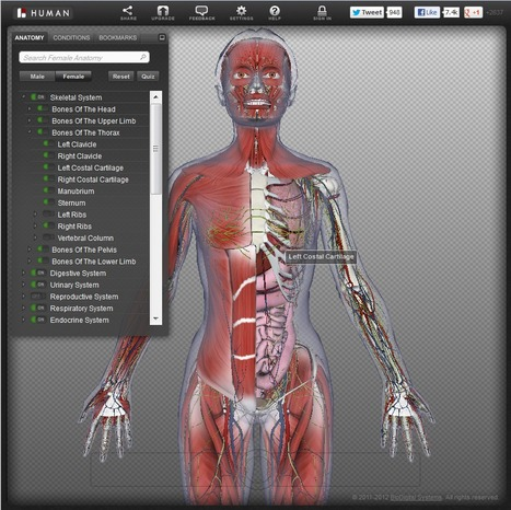 BioDigital Human: Explore the Body in 3D! | ICT in our schools | Scoop.it