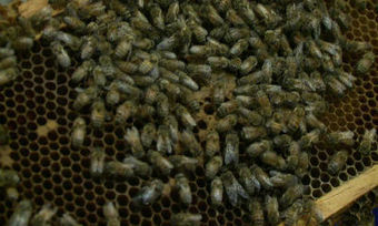 Mysterious decline of honey bee population could affect food supply | A Sense of the Ridiculous | Scoop.it