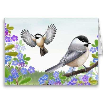 Black Capped Chickadees in Forget Me Nots Card from Zazzle.com   Artistic Greeting Cards   Scoop.it