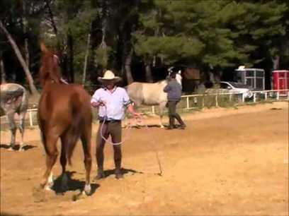 Un stage avec Andy Booth - partie 1 travail à pied -   Equitation éthologique   Scoop.it