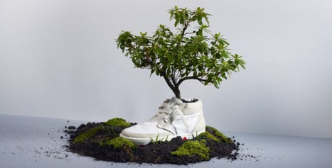 OAT: plant your shoes and make them bloom! | Sustainability | Scoop.it