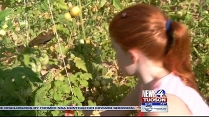 UA externs, Tucson Village Farm work for sustainability | KVOA (TV-Channel 4, Tucson) | CALS in the News | Scoop.it