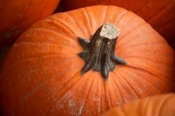 Fun Pumpkin Decorating Ideas for Halloween Decor   Jefferson at Salem Station   Fashion Decor design   Scoop.it