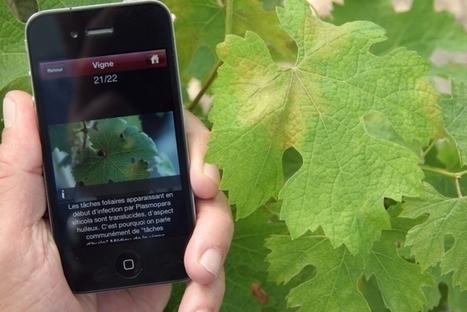 INRA - Colloque Agriculture et Innovation 2025 : les vidéos | Le Vin et + encore | Scoop.it