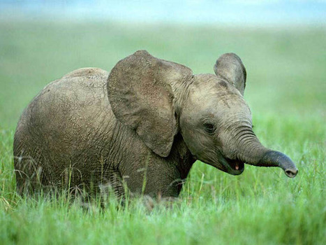 25 Cute Baby Elephant Photos | A Sense of the Ridiculous | Scoop.it