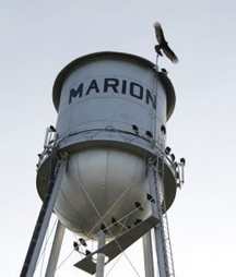 The vultures are back in Marion! - Kansas.com (blog) | Vulture Love | Scoop.it