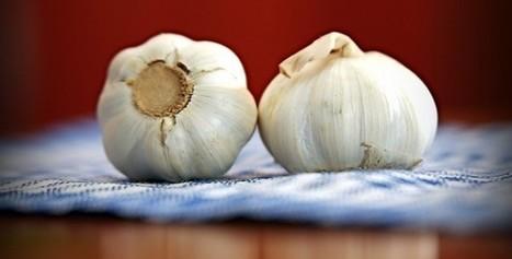 Garlic | Writing & Creative Ideas are essentials! | Scoop.it