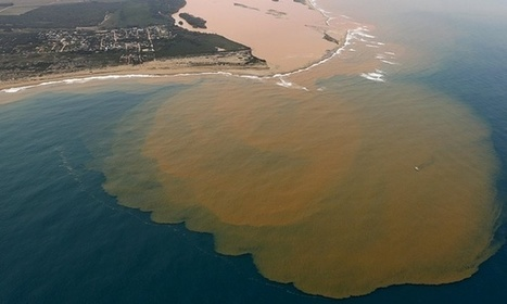 #Pollution from #Brazil dam burst enters the sea, killing marine life #Greenpeace | Messenger for mother Earth | Scoop.it
