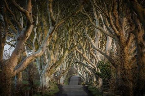Dark Hedges included in best road trips in UK and Ireland | Causeway Pictures | Scoop.it